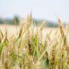 किसानों की समस्याओं को लेकर गंभीरता दिखाए सरकार: किसान संगठन ने प्रधानमंत्री के नाम दिया ज्ञापन